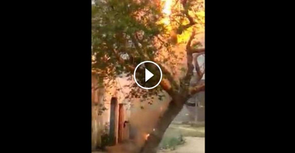 Elektrik akımının ağaca yaptığı...